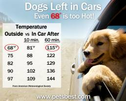 Sitting in a hot car can pose a serious threat to canines' health