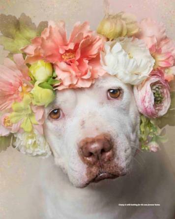 Floral Crown on Pit Bull