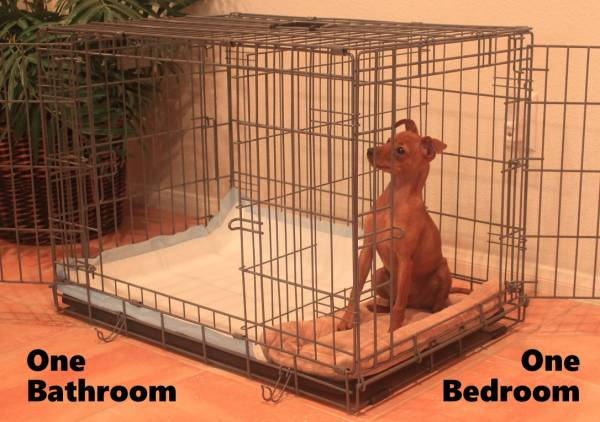 The Potty Training Puppy Apartment Is A One Bedroom Bathroom Home That Teaches And Trains Your Or Dog To Always Go In Their Own Indoor