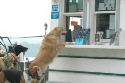 Canine Cruises, CREDIT Potomac Riverboat Co5