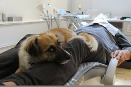 Luna has become an intrinsic part of treatment at The Dental Boutique