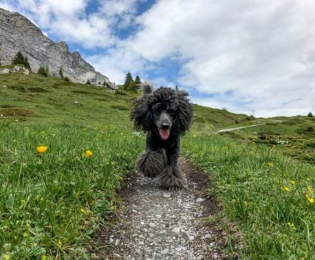 Rosa hiking the Swiss Alps