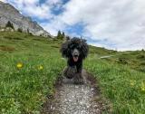 Rosa hiking the Swiss Alps