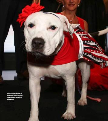 Abigail, a pit bull, was brought into a busy Miami-Dade animal control agency last November.