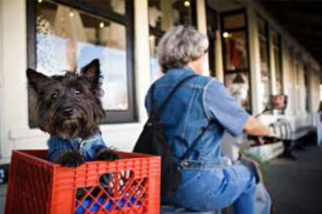 Fido Friendly shops