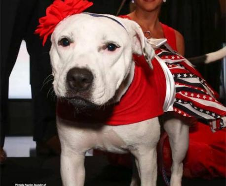 Abigail - American Human Hero Dog of the year winner