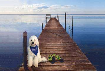 Dog on the dock of the Shallows Resort