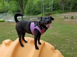 4Paws Kingdom guest dog