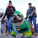 Dogs are part of the parade during ULLR Fest and other Breck festivals.