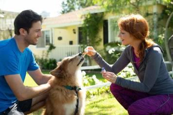 Cannabidiol (or CBD) for pets