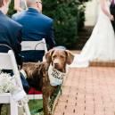 Dog in honor of wedding couple