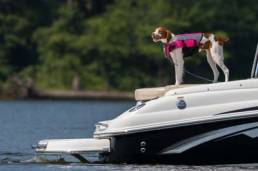 Bring Fido with you to Lake Geneva