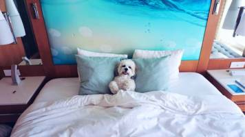 high-end Fido-friendly hotel, Paséa Hotel & Spa