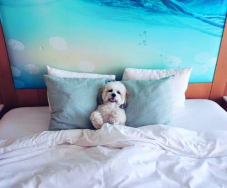 Paséa Hotel & Spa offers up an amazing property for Fido to sniff and review.
